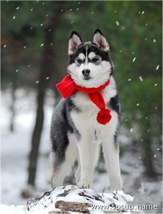 12星座选择不同品种的狗