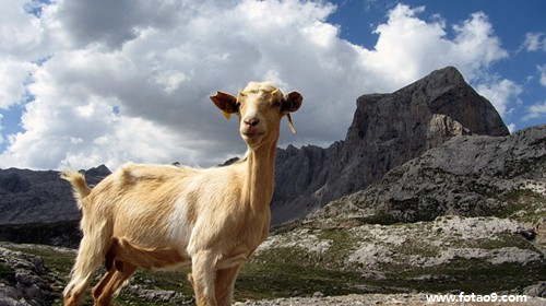 梦见吃有虫的肥代表大麦?猪肉网林峰演唱会图片
