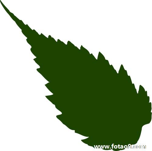 绿色健康的底图素材