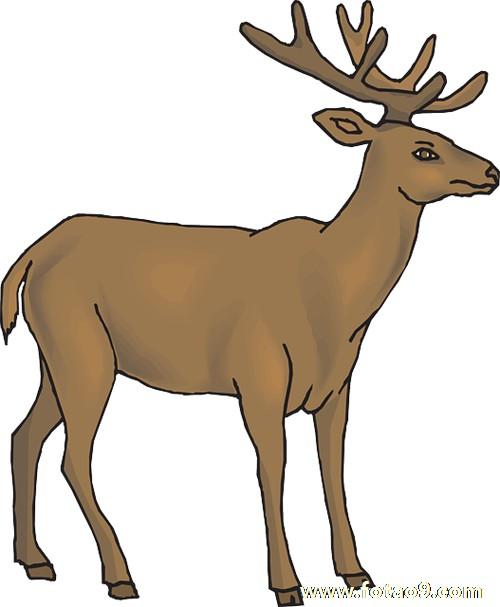 孕妇梦见被鹿追赶 咬