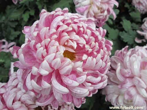 周公解梦梦见自己种的花长了好多小芽