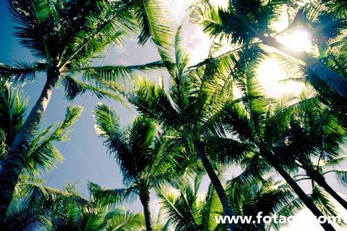 梦见大树在前面掉落 做梦梦见大树在前面掉落