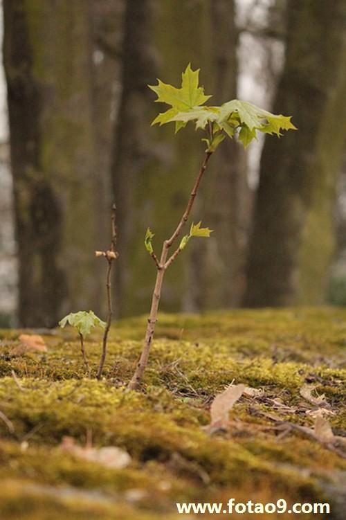 梦见枣树树是什么意思?