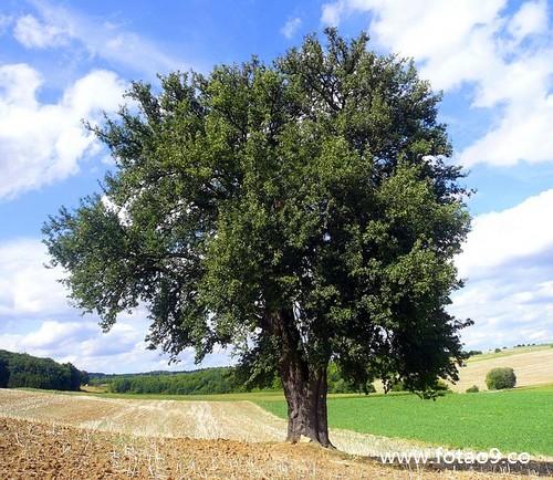 梦见树上落下带皮的核桃是怎么回事?