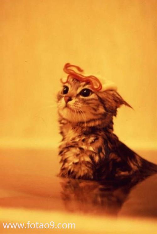 壁纸 动物 狗 狗狗 猫 猫咪 小猫 桌面 500_744 竖版 竖屏 手机
