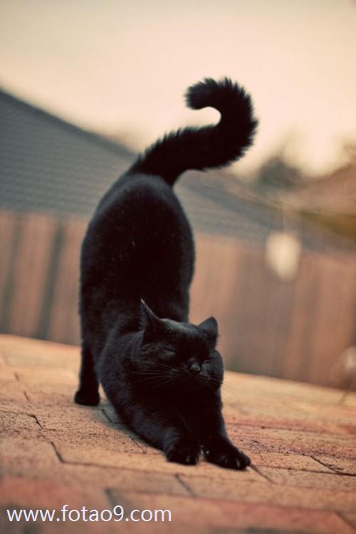 梦见偷偷养只猫,解梦梦见偷偷养只猫