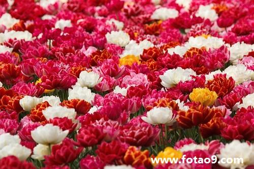 梦见吃了很多漂亮的花还留下很多