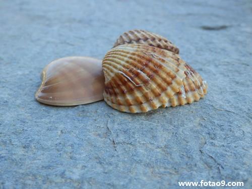 动物 海底 软体 500_375