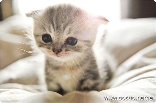 梦见可爱的小猫